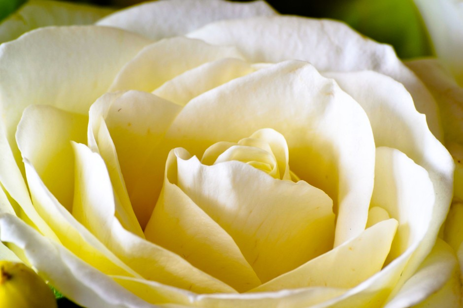 flower-3
