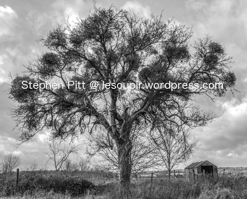 tree_mono_1