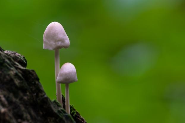 mushrooms-2