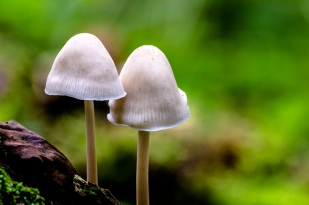 mushrooms-3