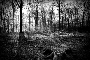 forest-2_bw1