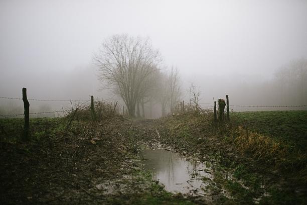 Misty, muddy walks